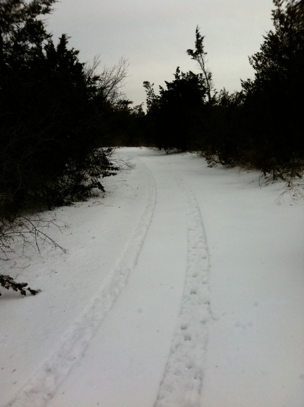 Hiking through the deep snow, I broke through the scrub brush and came across the ring track. ATVs have used it.