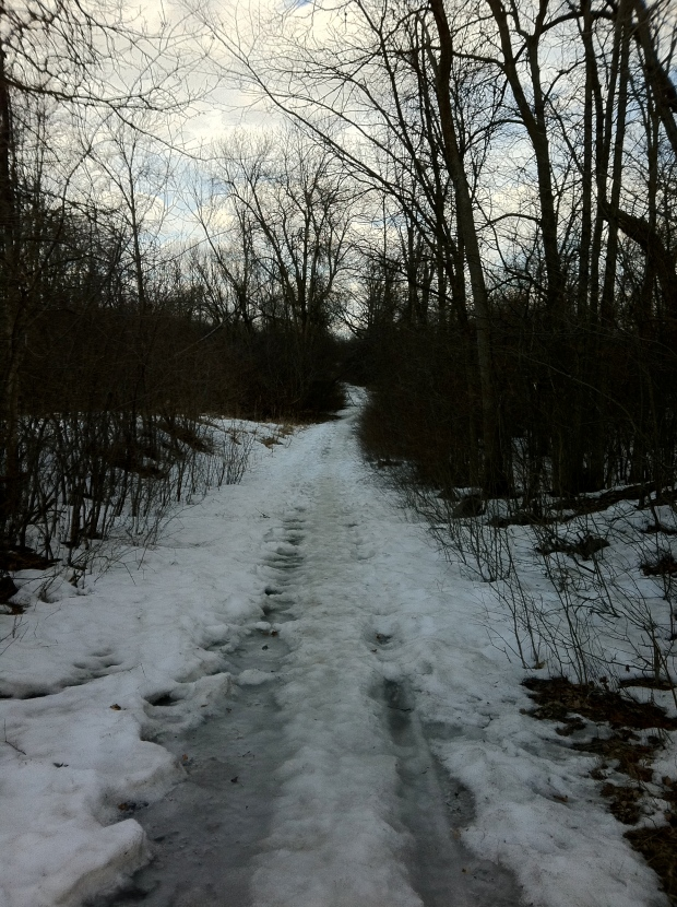 The abandoned Wright farm road leading to the site of his original cabin, possibly the oldest in the Capital Region.