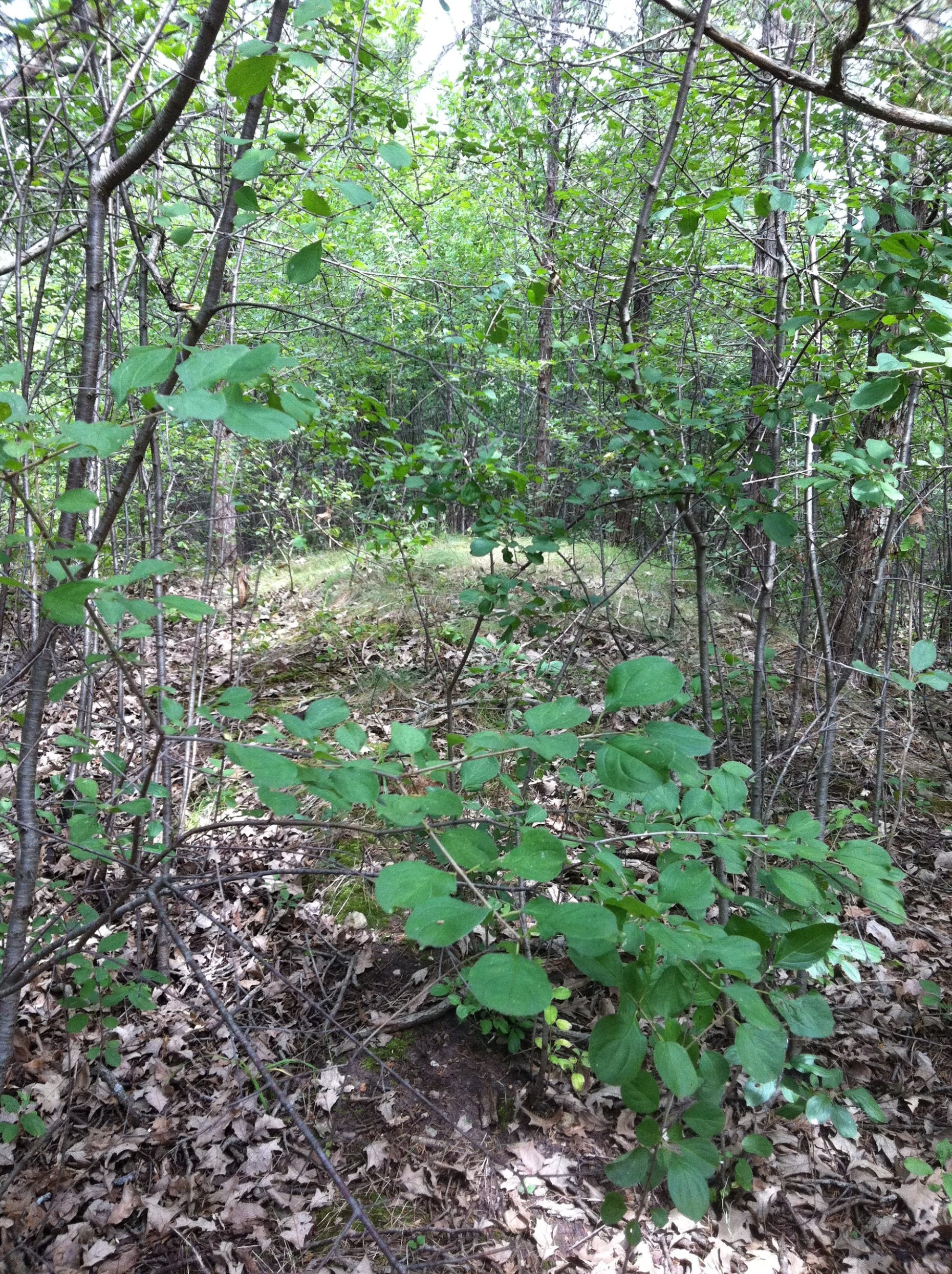 I explored the area Wallbridge described the mounds to be located in PEC and I came across the unusual mounds.